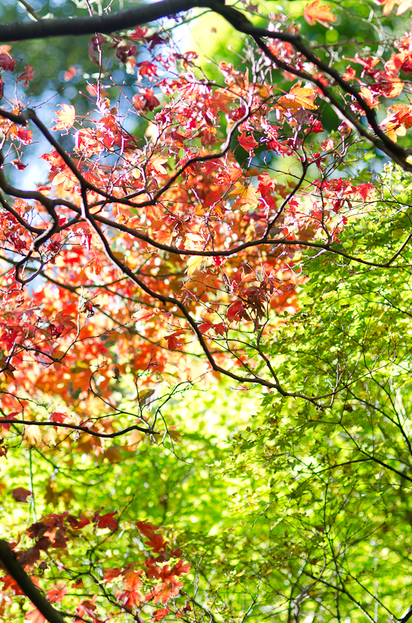Autumn Foliage | At Down Under | Viviane Perenyi
