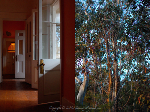 Sinemage Diptych Room and Bush View
