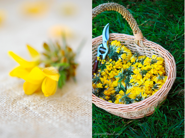 Sinemage Gorse Flowers Diptych