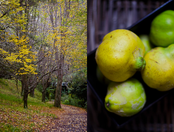 © 2012 Viviane Perenyi Quince and Autumnal Foliage