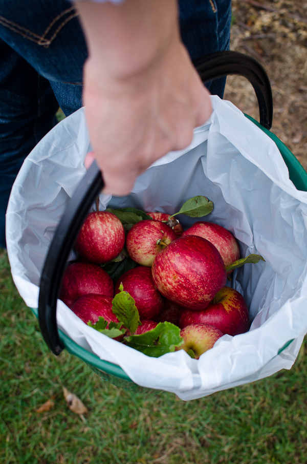 Apple Picking | At Down Under | Viviane Perenyi