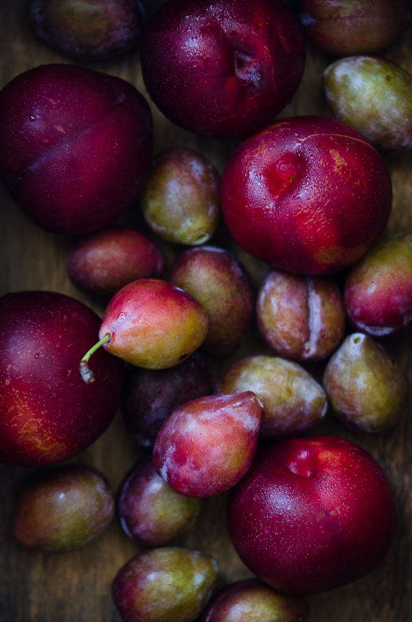 Plums | At Down Under | Viviane Perenyi